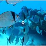 Lanzarote a fondo, buceo y fotografía submarina con TVE