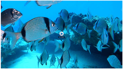 Lanzarote in depth, scuba diving and underwater photography with TVE