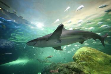 Dive-with-sharks-in-Aquarium-Lanzarote-and-Native-Diving
