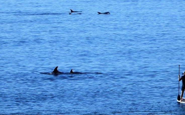 costa-teguise-delfines-lanzarote