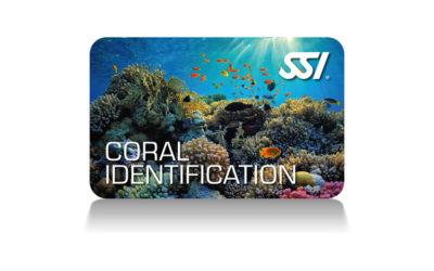Identificación de corales
