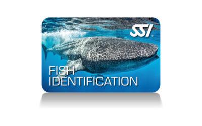 Identificación de peces